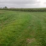Chemin herbeux entre vignes